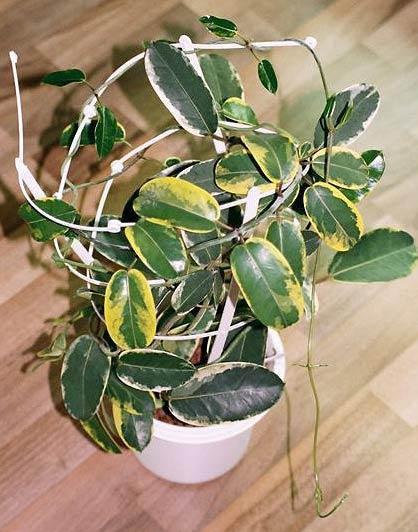 еловые иголки как удобрение для комнатных растений