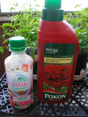 Чем удобрять розы в домашних условиях
