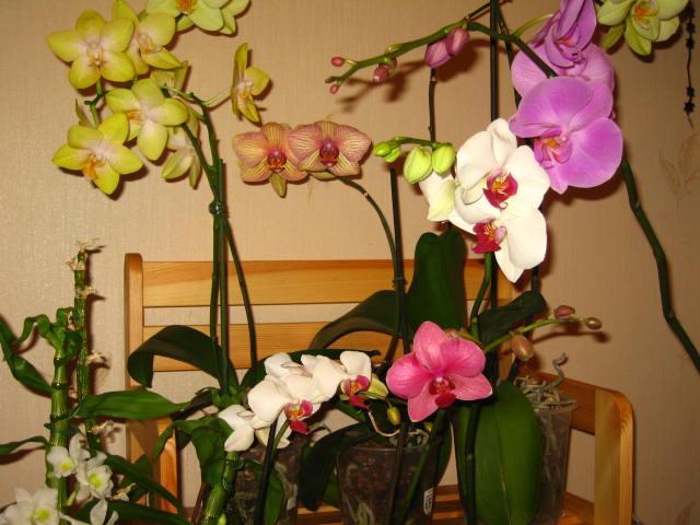 Не цветут орхидеи в домашних условиях что делать 849