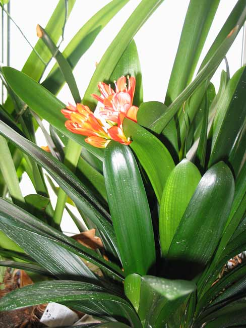 http://www.flowersweb.info/bitrix/components/bitrix/forum.interface/show_file.php?fid=47108
