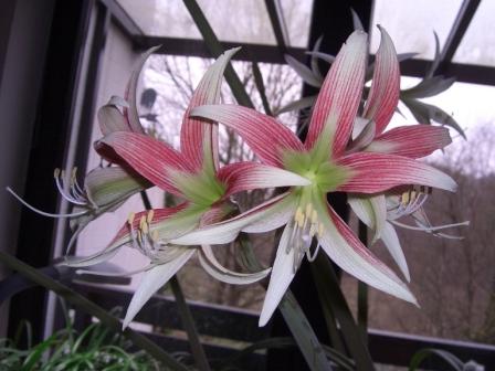 http://www.flowersweb.info/bitrix/components/bitrix/forum.interface/show_file.php?fid=576604&width=450&height=450
