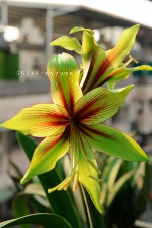 http://www.flowersweb.info/bitrix/components/bitrix/forum.interface/show_file.php?fid=576754&width=450&height=450