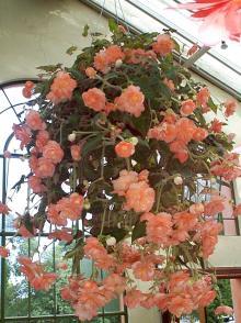 http://www.flowersweb.info/images/acquaintance/acquaintance-21.jpg