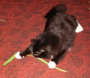 Кошки и комнатные растения