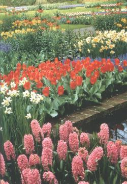 Живые цветы из голандии алкоголь в подарок мужчине