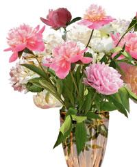 http://www.flowersweb.info/images/interior/floskazka3.jpg