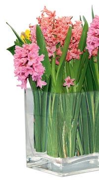 http://www.flowersweb.info/images/interior/floskazka4.jpg