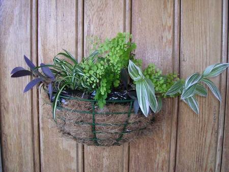 Картинки по запросу Вкладыши из кокосового волокна для комнатных растений