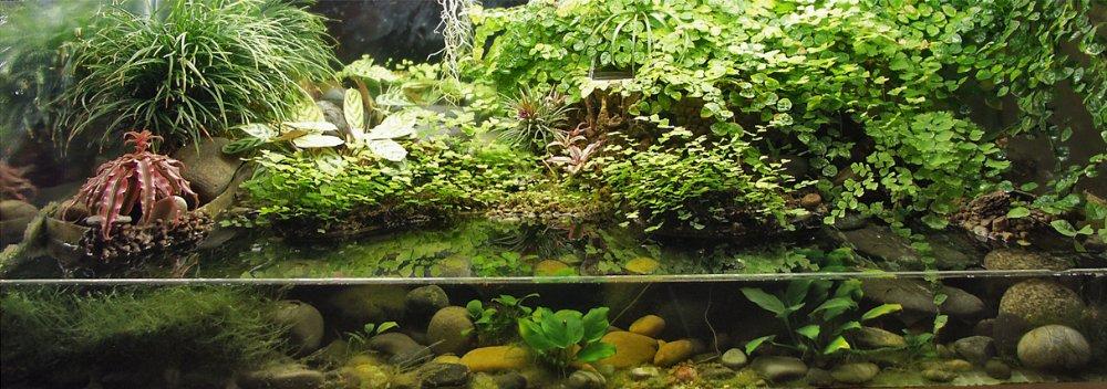 paludariums on pinterest terrarium dart frogs and