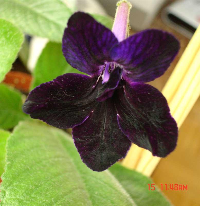 http://www.flowersweb.info/upload/forum/1d5/1d5574397475331e24217471e8e6f13f.jpg