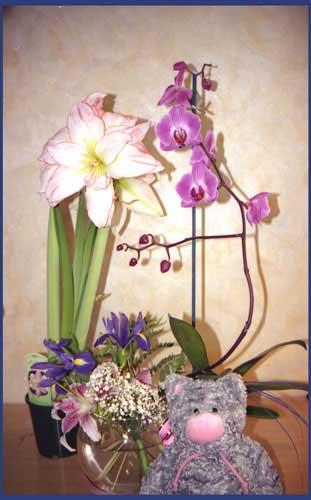 http://www.flowersweb.info/upload/iblock/20ac7df73c1b6608f1830ddd410e20ce.jpg