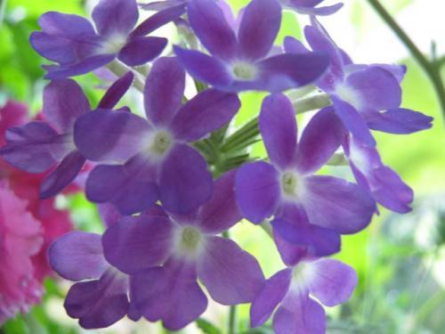 http://www.flowersweb.info/upload/iblock/282/2825a3278a58298b5e24f21cad2bb761.jpg