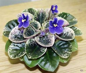 листья из бисера для фиалок