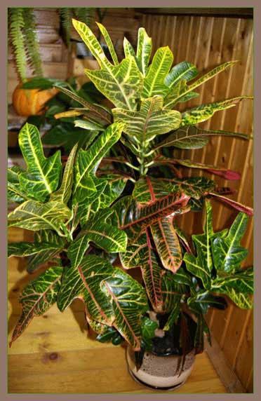 http://www.flowersweb.info/upload/iblock/36402df45424c319e5fdfbe03085dad4.jpg