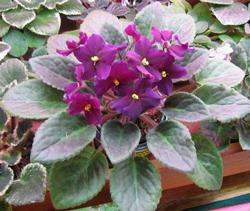 http://www.flowersweb.info/upload/iblock/3c6c7766741f0a8efdca2bc524ee8f05.jpg