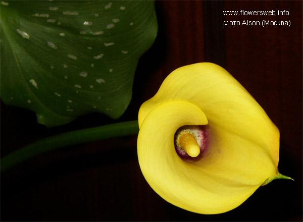 http://www.flowersweb.info/upload/iblock/42b7f84845db0e317c406e966128f7ec.jpg