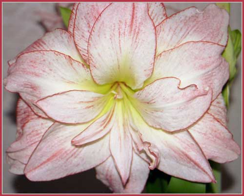 http://www.flowersweb.info/upload/iblock/523ab63299dac96379f978cc0caf6f7c.jpg
