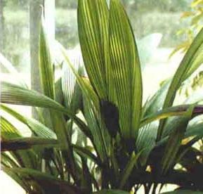Списоккаталог растений на букву К