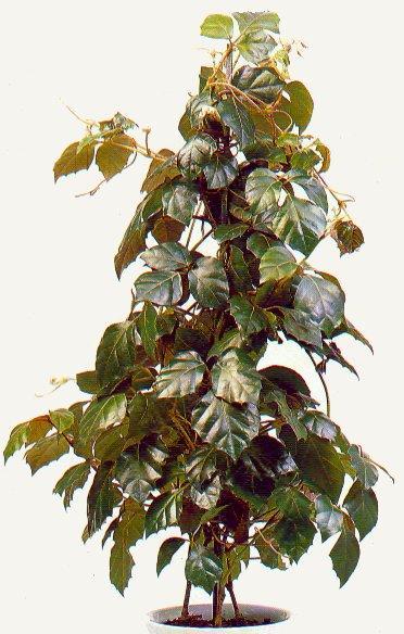 http://www.flowersweb.info/upload/iblock/8ca01ea920679a0fe3728441494041b9.jpg