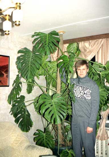 http://www.flowersweb.info/upload/iblock/97543b25105c1b2d3c23ff6a498d0ffb.jpg
