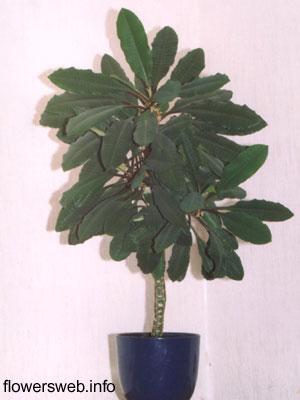 http://www.flowersweb.info/upload/iblock/b81e3236eabf834d1967edf50710d059.jpg