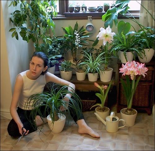 каталог комнатных цветов с фото: