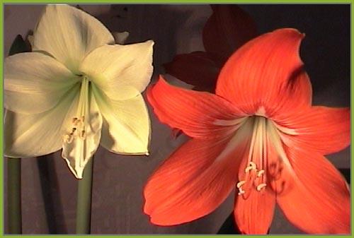 http://www.flowersweb.info/upload/iblock/d72e5ac8d28f66623e7067c1146465b8.jpg
