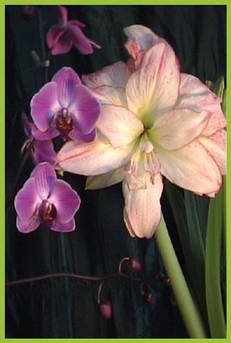 http://www.flowersweb.info/upload/iblock/d81b27d4cafa8d61de2435fc0b5c0b87.jpg