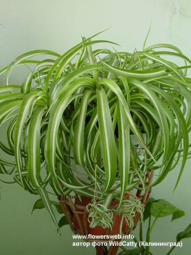 Viridis des plantes pour purifier l 39 air - Plante qui purifie l air ...
