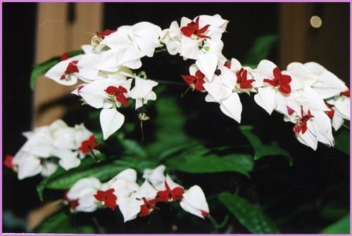 http://www.flowersweb.info/upload/iblock/e0b114c6e6d119ff1b9a101d368626d2.jpg