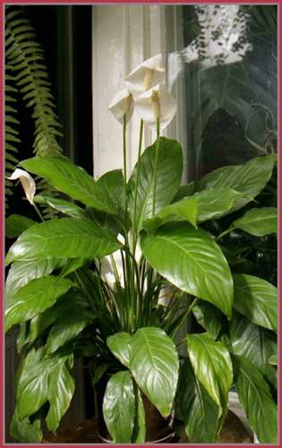 http://www.flowersweb.info/upload/iblock/e4266e4306c8e503ef8d617c68f26fce.jpg