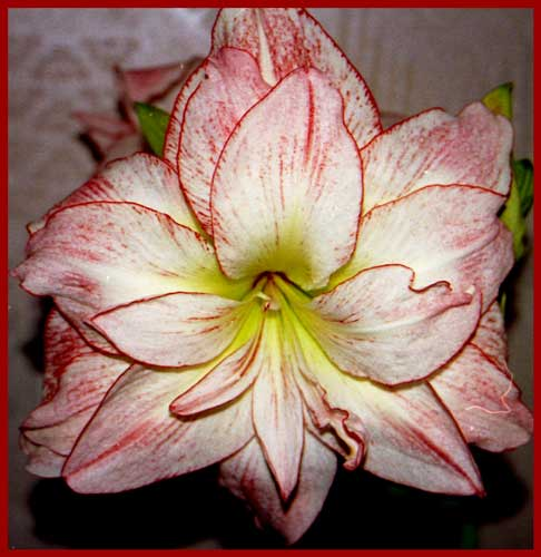 http://www.flowersweb.info/upload/iblock/e5cae57135f812e8cc091ea8128e553a.jpg