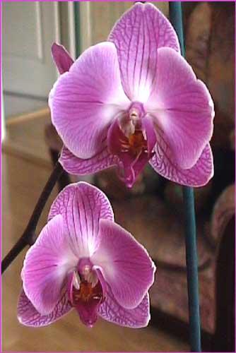 http://www.flowersweb.info/upload/iblock/ef215e738c5307a05be43bcf95b66f37.jpg