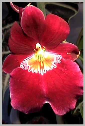 http://www.flowersweb.info/upload/iblock/f4932ee45d1697ee4810e0d480fe78be.jpg
