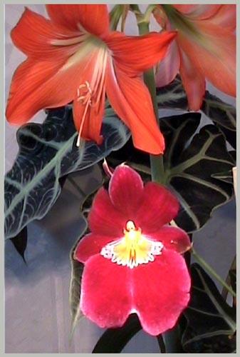 http://www.flowersweb.info/upload/iblock/fedd961ebc4938c1e3a7878cd3e779e5.jpg